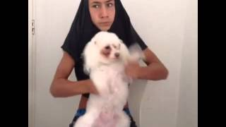 Funny Vines: When She Stops Yawning The Beat Drops funny vine videos daily
