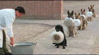 Wow....... Anjing Antri Makan Dengan Tertib