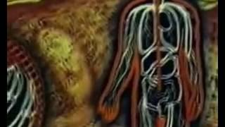 Анатомия и физиология человека  Фильм 2
