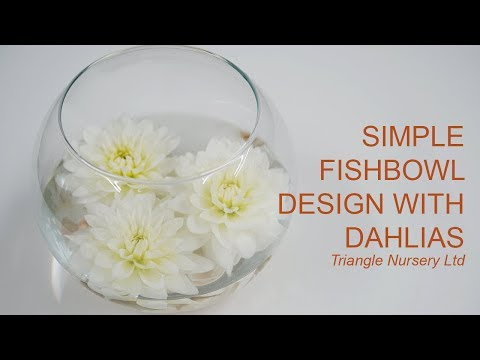 Quick And Simple Fish Bowl  With Dahlias - Wholesale Flowers Direct