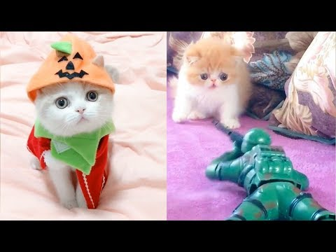 Baby Cats - Funny and Cute Baby Cat Videos Compilation