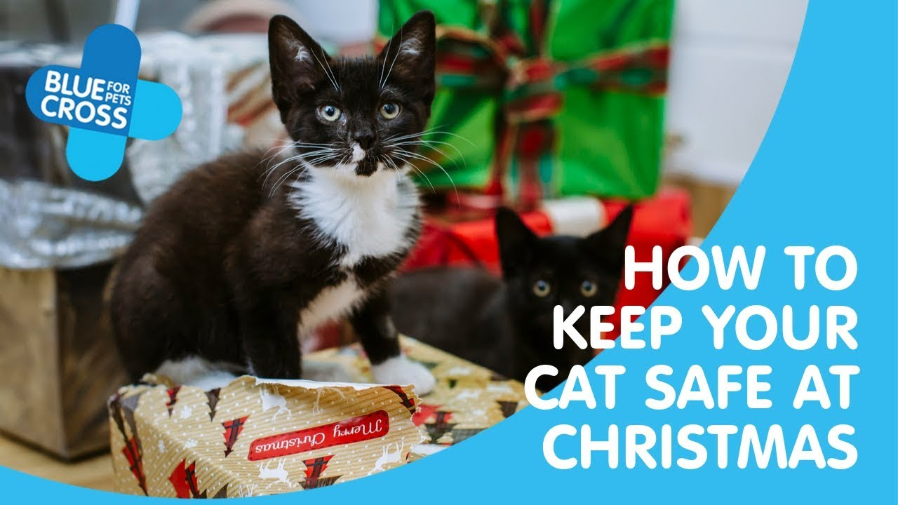 Keep Your Cat Safe At Christmas Blue Cross