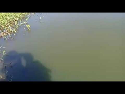 Em Mulungu: Maria, denunciou através do vídeo que o empresário está poluindo o Rio Mamanguape
