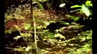 Parc National de Taï   Patrimoine Mondial de Côte d'Ivoire   Réserve de Biosphère
