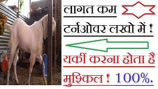ऐसी नस्ल जो बनाएगी कामयाब वो भी साल भर में ! सोजत !sojat | goat farming in hindi |goat breed