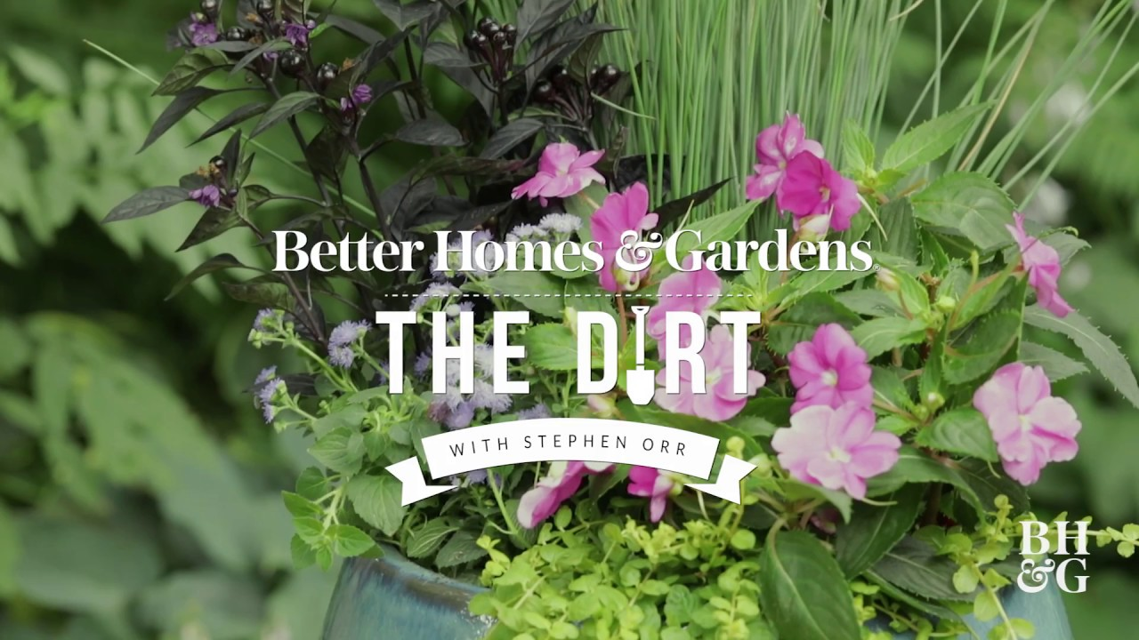 Heat busting annuals that bloom all summer long the dirt better heat busting annuals that bloom all summer long the dirt better homes gardens izmirmasajfo