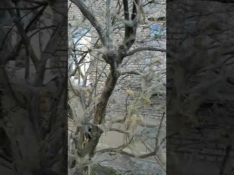 #гусеницы#атаковали#Питер#ужас