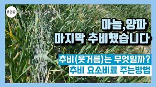 봉춘팜 마늘,양파농사|…
