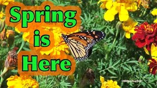 Preschool Song for Spring - Spring is Here - Littlestorybug