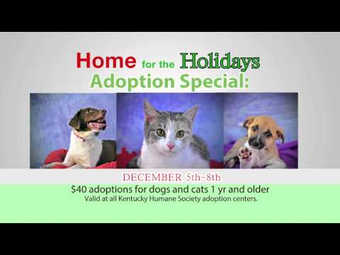 Kentucky Humane Society 2013  - Home for the Holidays