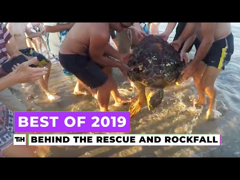 Behind the Best of 2019: Rockfall and Turtle Rescue | This is Happening