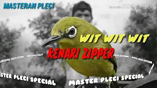 Download Mp3 Masteran Pleci : Wit Wit Wit Kenari Zipper   Terbukti Ampuh