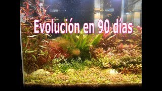 evolucion 90 dias
