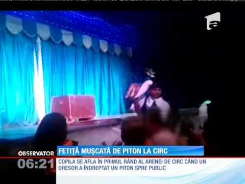 O fetiţă a fost muşcată de un piton la circ