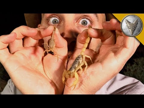 Which Scorpion STING is Worse?!