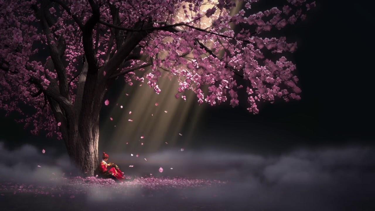 Top Anime Girl Wallpaper Wallpaper Engine Sakura Beautiful Music Youtube