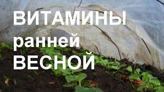 ТЕХНОЛОГИЯ посадки салатов и  редиски