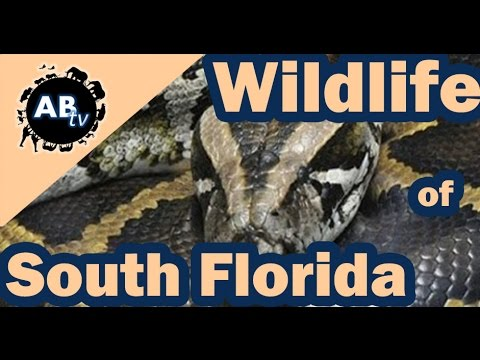 Wildlife of South Florida : Primitive Tim : AnimalBytesTV