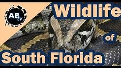 Wildlife of South Florida : Primitive Tim : AnimalBytesTV