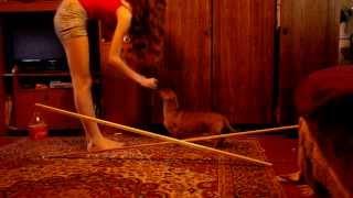 Видео уроки. Первые прыжки питомца. (Анастасия и Бастильда)