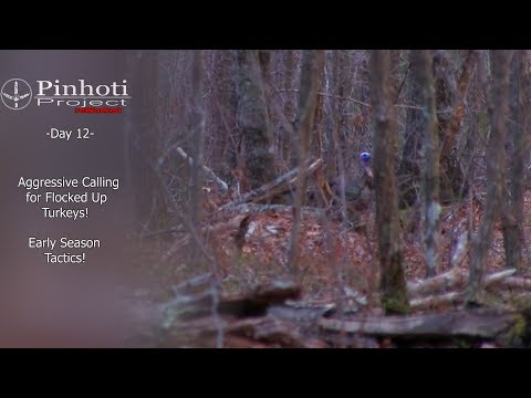 EARLY SEASON TACTICS FOR GOBBLERS_ TURKEY HUNTING TIPS-  Pinhoti ReWorked Day 12