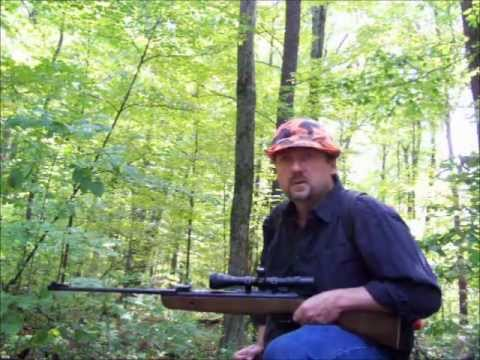 Air Rifle Squirrel Hunting