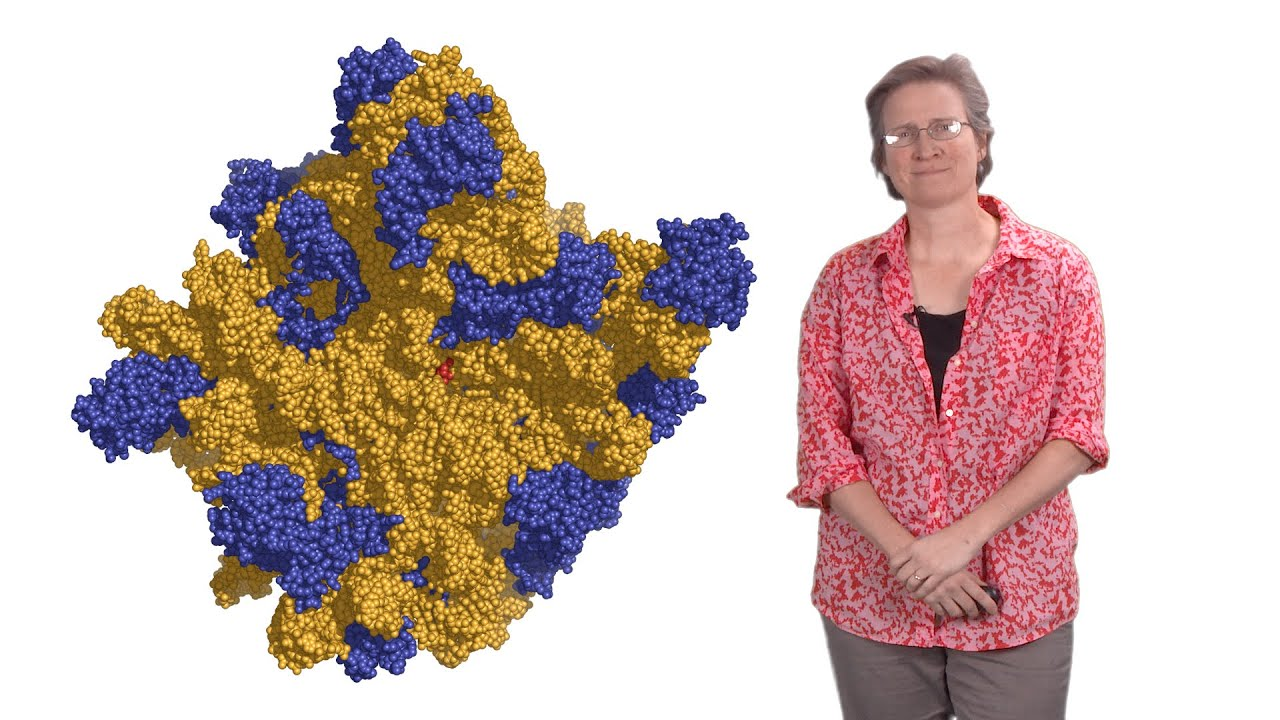 Rachel Green (Johns Hopkins U., HHMI) 1: Protein synthesis: a high fidelity molecular event