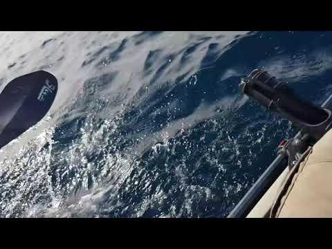 Great White Shark Encounter Whilst Kayak Fishing, Urunga, NSW, Australia