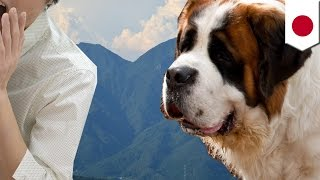 ハイジの村 大型犬が人かむ