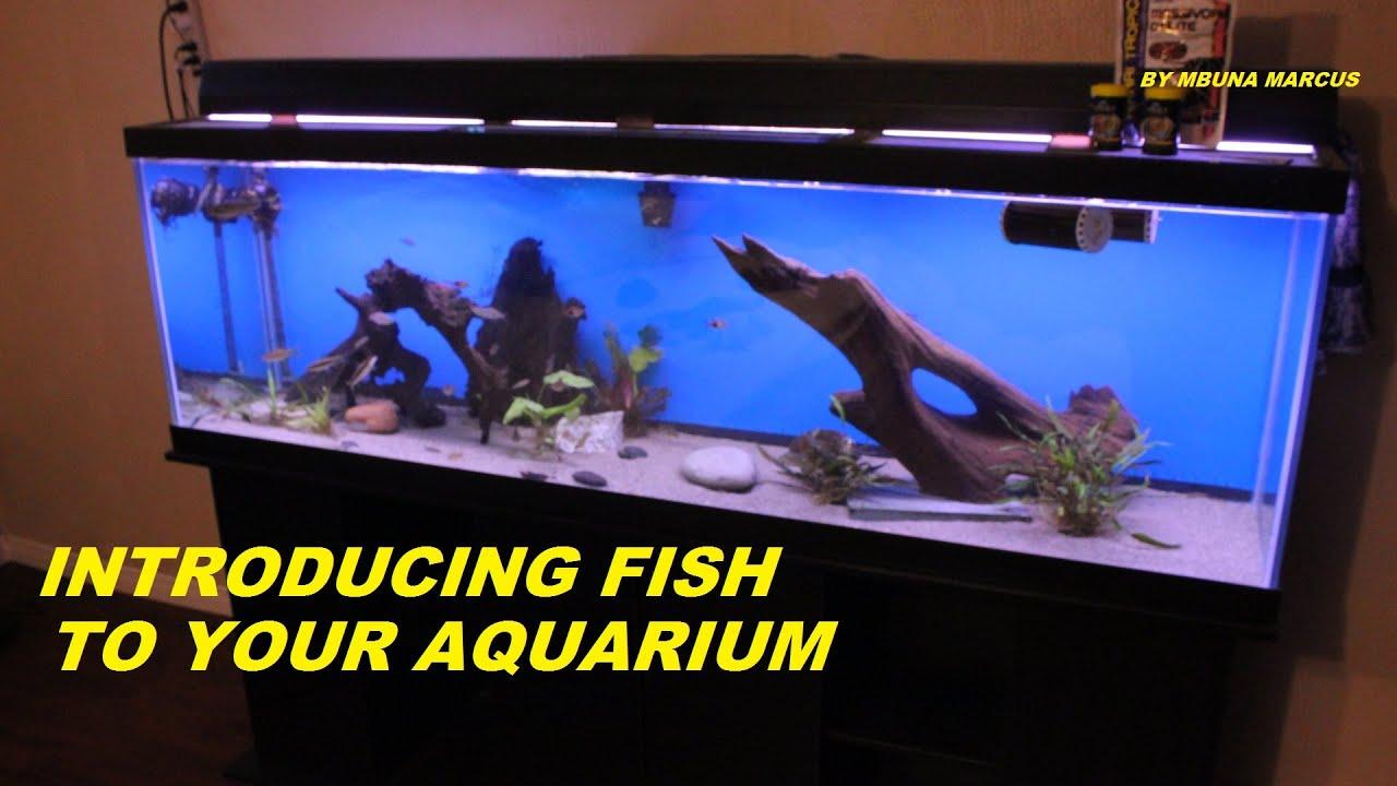 pics How to Introduce a Fish to an Aquarium