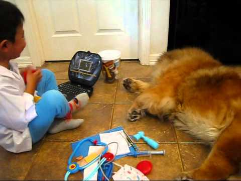 5 years old Dr. Dolittle seeing his patient Chow dog - pretend play