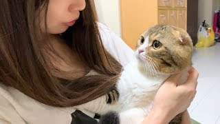 【cat】Because he is worried about a typhoon, I have a lot of chats【Scottish Fold】