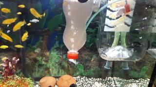 YAVRU BALIKLAR İÇİN ARTEMİA ÇIKARTMA, akvaryum balıkları