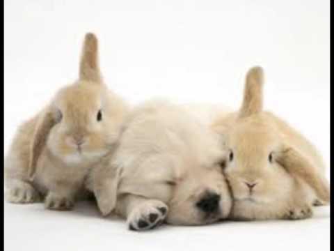 กระต่ายแคระน่ารักที่สุด