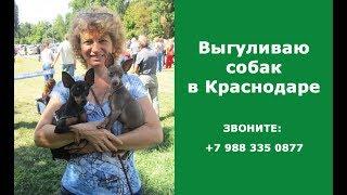 Выгул собак в Краснодаре