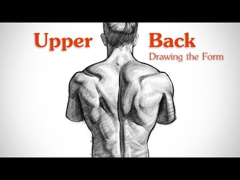 How to Draw Upper Back Muscles - Form