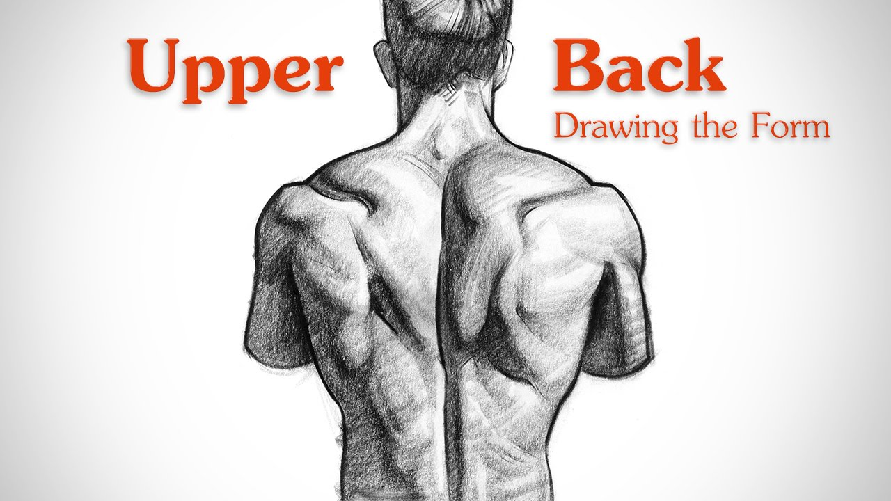 How To Draw Upper Back Muscles Form Youtube