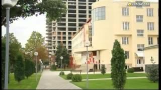 На сотрудника института культуры в Краснодаре завели дело за незаконный спил деревьев