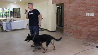 Manalo K9 Technologies dog handling demo for T & C / Barrington Place May 28, 2016