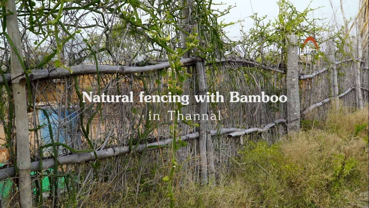 Natural and Living Fences