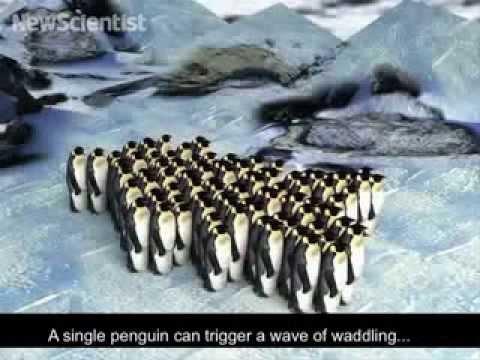 Huddling penguins move like cars in traffic