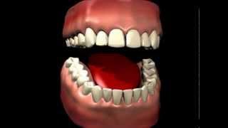 Прикрепленная десна (гингива)(Раньше в анатомии десны выделяли прикрепленную и свободную части. http://www.denta-beaute.com/, 2013-11-24T00:47:52.000Z)