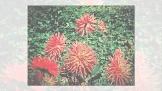 Осенние цветы   души очарование !!