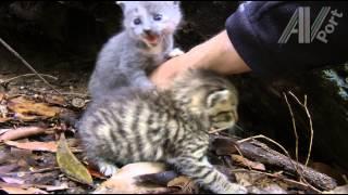 Cute Feral Kittens - Best Of Kittens In Wild Den - Day 1 to 18
