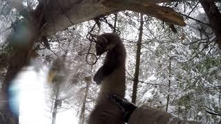 Как поймать куницу, Ловля куницы, проходной капкан на куницу, зимняя охота