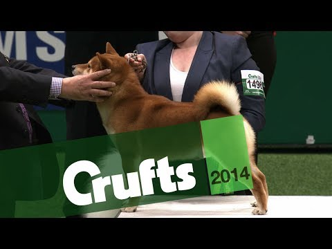 Group Judging | Utility | Crufts 2014
