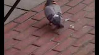 Bread Head - Pigeon Holed