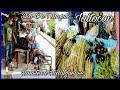 Video de Jaltocan
