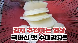 감자요리 에 쓰기 좋은 국내산 햇 수미감자 마켓림 햇감…