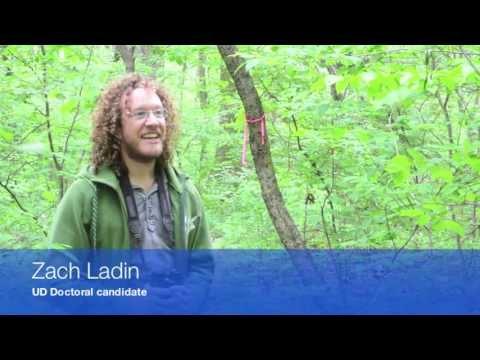 Zach Ladin, UD Doctoral candidate, studies wood thrush throughout Newark